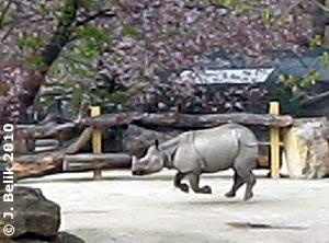Sundari hat ihre narrischen Minuten, 9. April 2010
