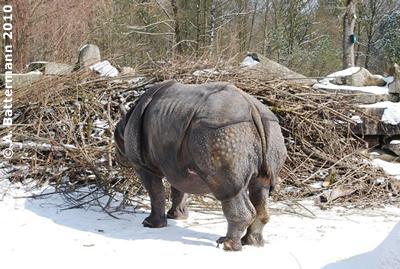 Nikolaus in der Außenanlage, Zoo Hellabrunn