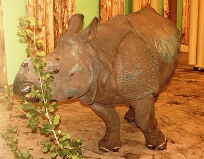 Manjula im Zoo Pilsen, 1. Juni 2010