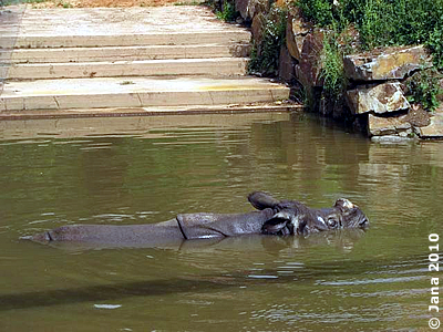 Beni im Teich, so kann man die Hitze leichter ertragen, 6. Juli 2010