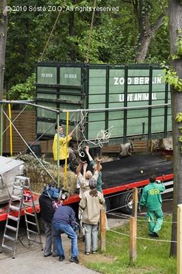 Jasmins Transportkiste wird zur Anlage gebracht, 12. September 2010 (Foto: Sóstó Zoo)