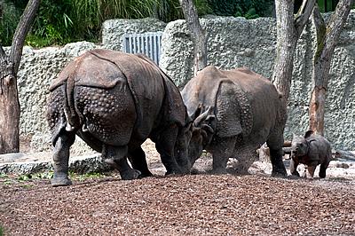 Rangelei ums Baby (Foto: Zoo Basel)
