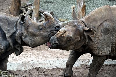 Ellora und Quetta (Foto: Zoo Basel)