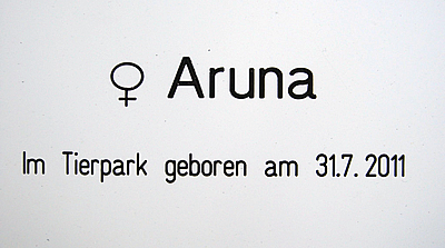 Infotafel Aruna, 17. August 2011