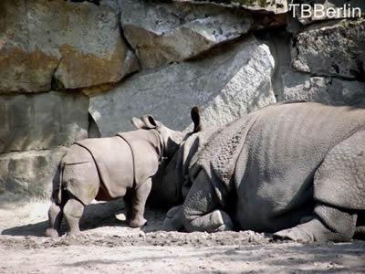 ... Wach auf, Mama, ich mag kuscheln! ...