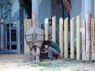 Fußpflege ist kein Problem! Sundari, Eveline und Helmut, Tiergarten Schönbrunn, 2. Jänner 2012