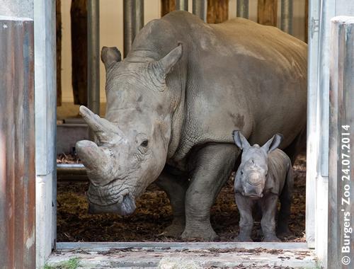 Kwanzaa und Baby