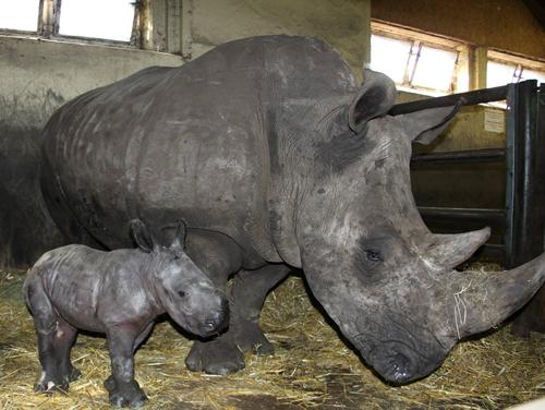 Kianga und Baby