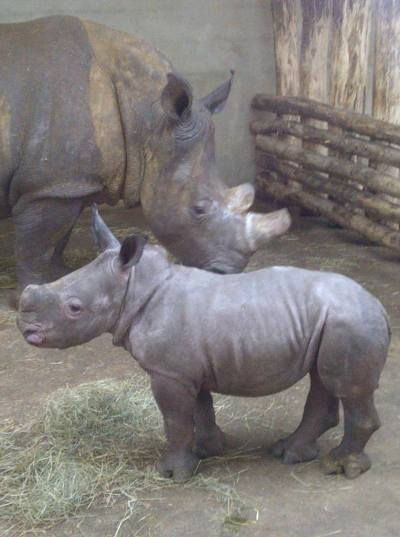 Hakuna und Baby