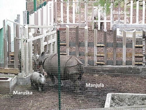 Baabuu, Manjula und Maruska