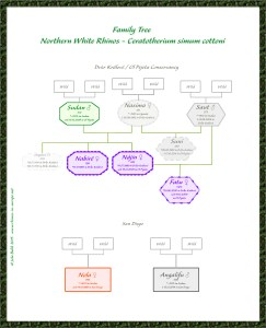 Stammbaum NWR