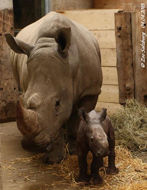 Tamu und Baby