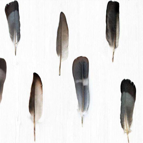 Decorandum Feather