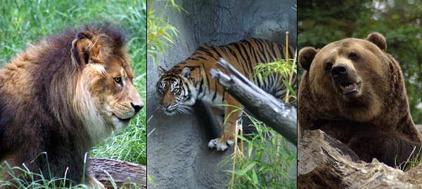 Image result for lions and tigers and bears