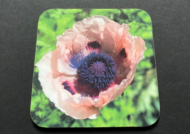 Pink Poppy on a photographic hardboard coaster. Square hardboard coaster with rounded edges. Size: 90x90x3 mm Weight 0.1kg