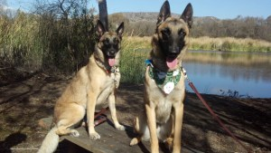 Sheba (L) and Romeo (R) at Santee Lakes in 2012.