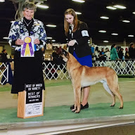 Thank you Marie! Romeo is a new Grand Champion.