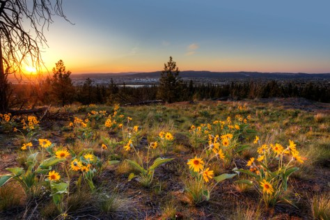 USA, Washington. Spokane County, Dishman Hills Natural Area