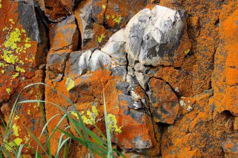 Lichens of Marlin Hollow