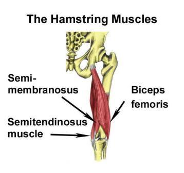 hamstring-strain-muscles
