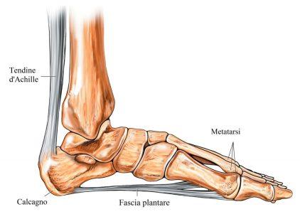 (del Dott. Alessandro Formica per Medicitalia.it) – Il dolore al calcagno c56481a622c6