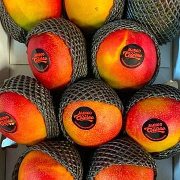 Mango kent via Aerea