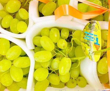 uva bianca vittoria