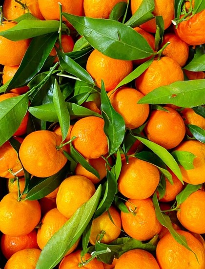 clementine calabresi italiane