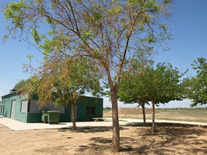 La zona de recreació del parc Rural d'Almussafes, oberta en Setmana Santa