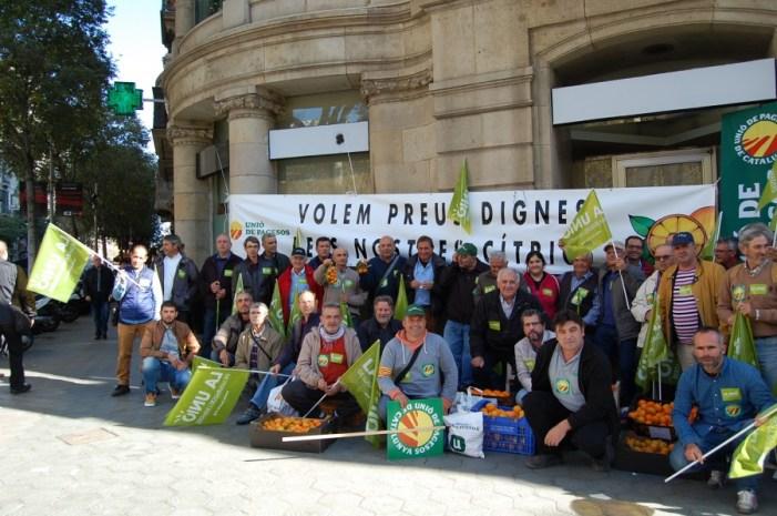 L'entrada de una plaga de Sud-àfrica provocaria un augment en els costos de producció als citricultors valencians de més d'un 22 %