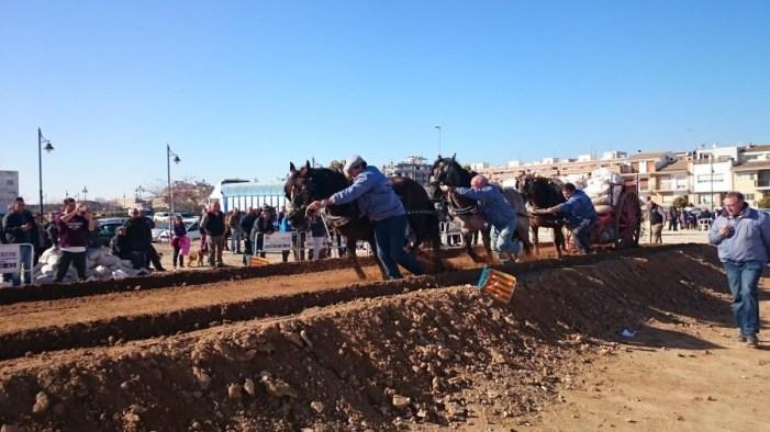 La 25 edición del concurso Tiro y Arrastre de Benifaió entrega sus premios