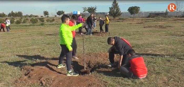 Més de 100 alumnes d'Almussafes planten distints exemplarsal parc Rural  de la localitat