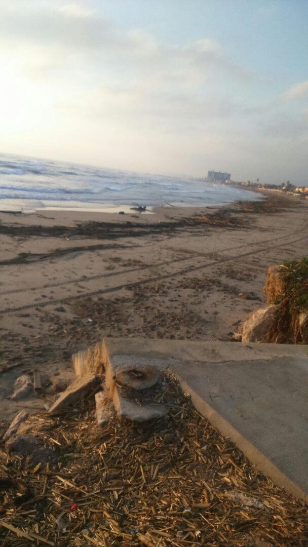 Cullera esclata contra la CHJ després de tornar-se a omplir la platja del Marenyet de canyes