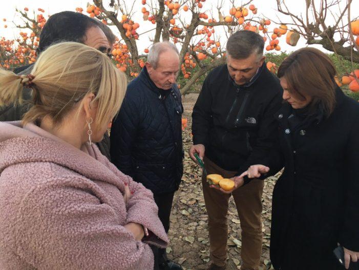 Bonig demana l'exempció de l'IBI rústic als agricultors del caqui afectats per les últimes gelades