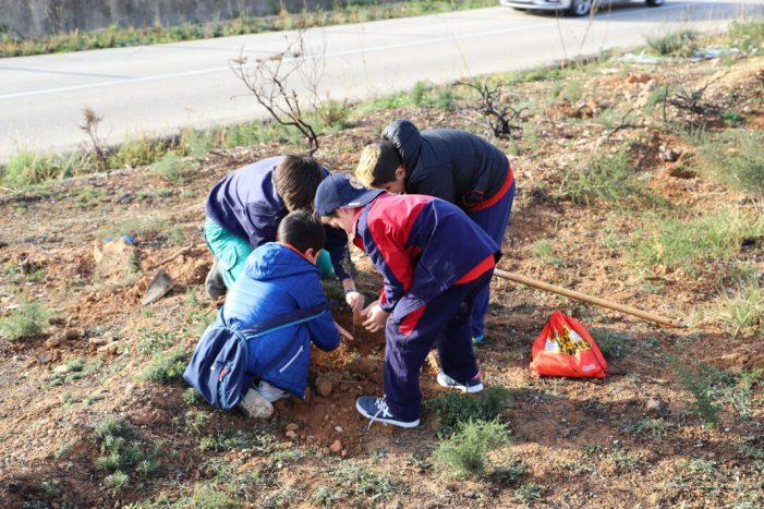 Cullera celebra el Dia de l'Arbre reforestant l'Alt del Cabeçol