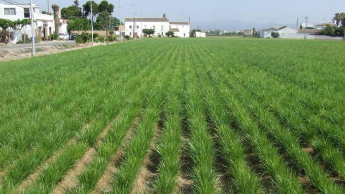 AVA-ASAJA lamenta que la ley de la huerta nazca sin presupuesto y sin ofrecer garantías a los agricultores