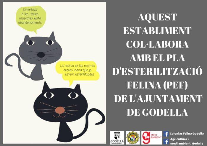 S'esterilitzen 62 gats del carrer durant l'any 2018 a Godella