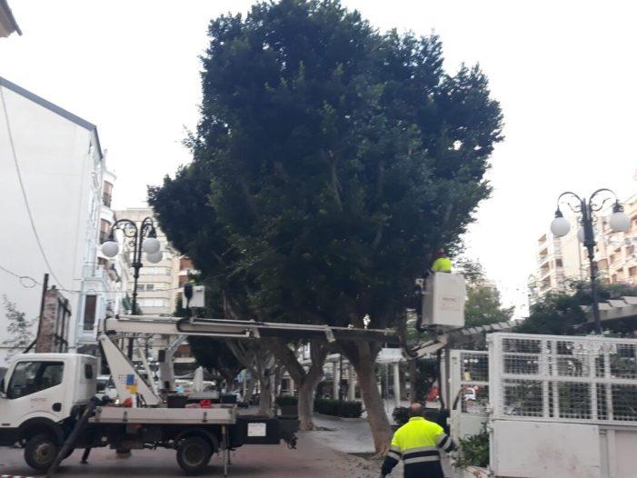 La poda d'arbres, a la plaça Major, mesura de prevenció per a combatre la plaga d'estornells