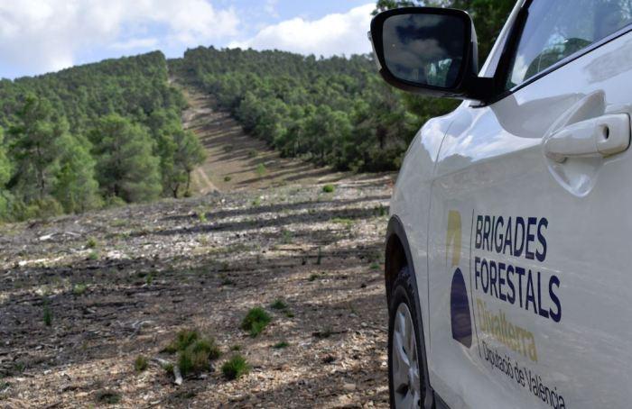 El PP demana que l'Ajuntament de Torrent sol·licite Brigades Forestals de la Diputació de València