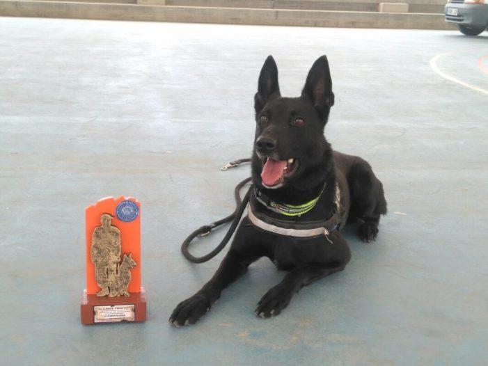 La Unitat Canina d'Alberic aconsegueix l'or en les proves autonòmiques
