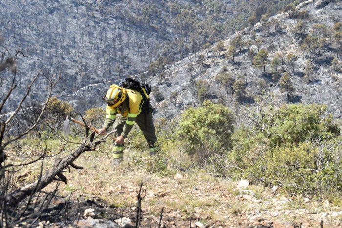 Les brigades forestals de la Diputació incrementen les hores de silvicultura per a previndre incendis
