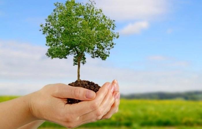 Burjassot celebra El Dia de l'Arbre amb noves plantacions
