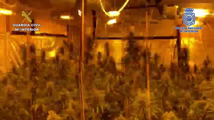 La Policia Nacional i la Guàrdia Civil desarticulen una organització criminal i desmantellen un cultiu de 3.000 plantes de marihuana a la província de València