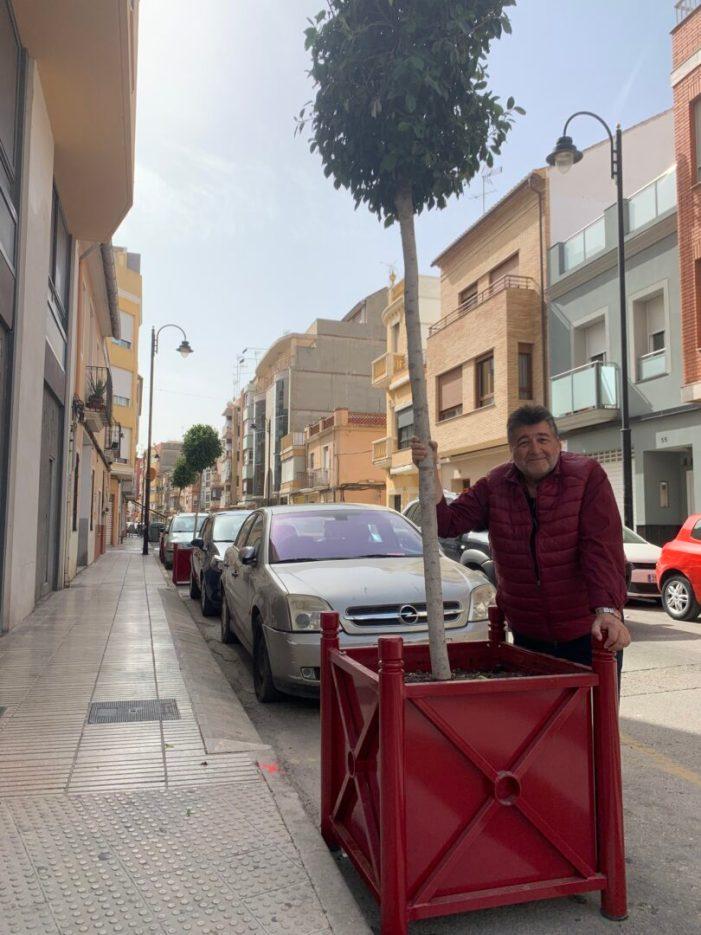 S'inicia la segona fase del pla d'arbratge urbà a Alzira