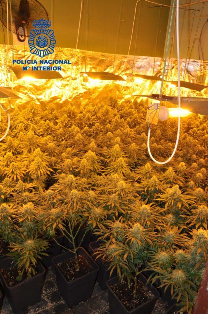 La Policia Nacional desmantella un laboratori  de marihuana i deté a una parella