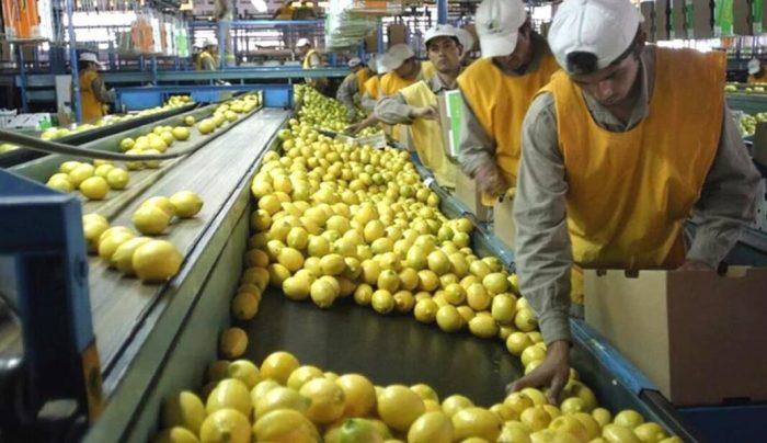 LA UNIÓ reclama que es realitze una auditoria fitosanitària a tot el sector citrícola argentí i que es continue amb la suspensió de les importacions fins no tindre garanties