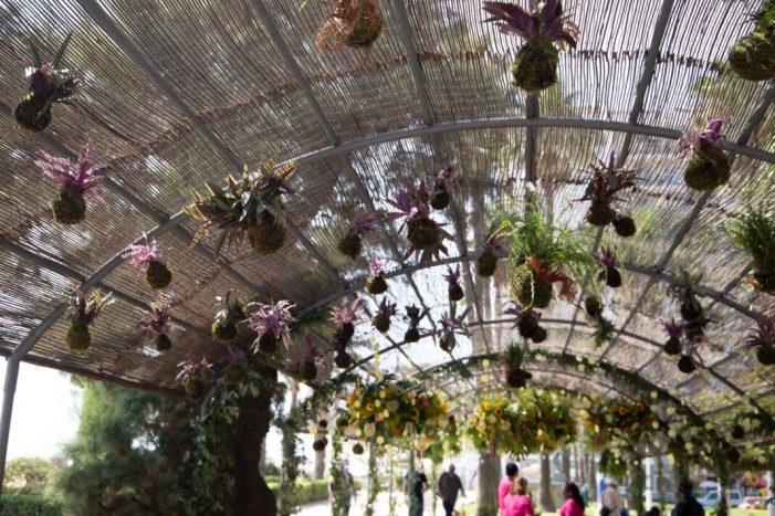 Cullera convertix el Parc de l'Oasi en un racó floral