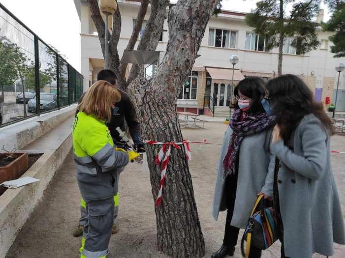 Godella comença un tractament d'endoteràpia en els pins per a previndre la processionària