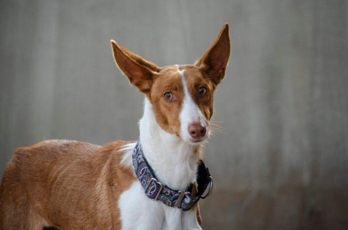 """Este dissabte dia 30, la Desfilada de gossos abandonats A.O.P.A. i BIOPARC serà """"virtual"""""""