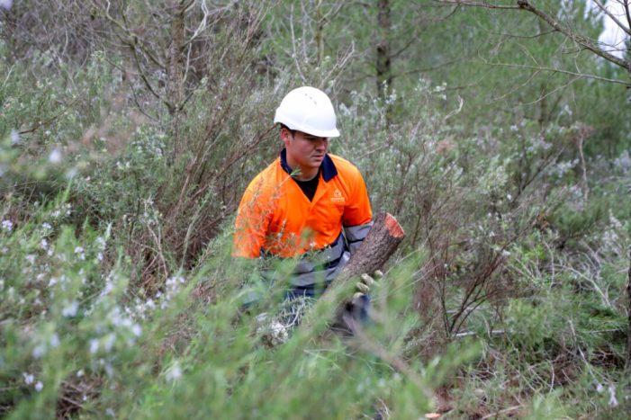 Antella neteja el seu important Barranc de la Manyana